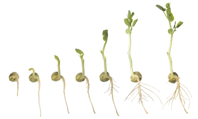 how many seeds did you plant today the fourth revolution blog