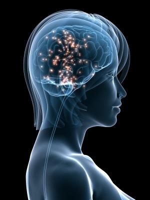 hormone-brain
