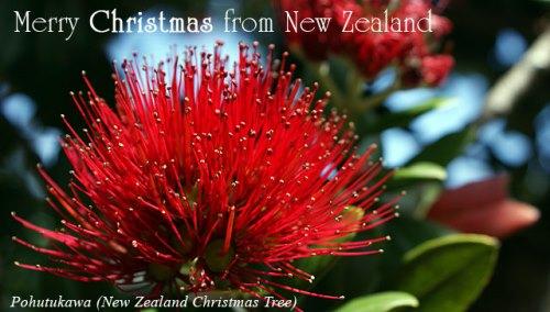 pohutukawa - New Zealand Christmas Tree